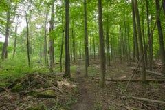 Fuga dentro de Bruce Trails Splitrock Narrows imagens de stock royalty free
