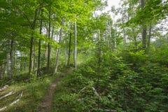 Fuga dentro de Bruce Trails Splitrock Narrows fotos de stock royalty free