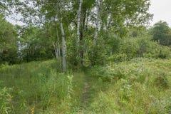 Fuga dentro de Bruce Trails Splitrock Narrows fotos de stock