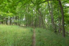 Fuga dentro de Bruce Trails Splitrock Narrows fotografia de stock royalty free