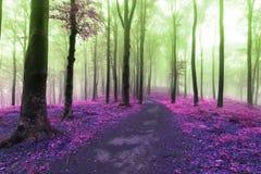 Fuga do conto de fadas nas cores mágicas da floresta de outros mundos Foto de Stock Royalty Free