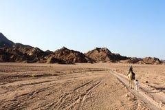 Fuga do deserto no deserto de Sinai Imagem de Stock