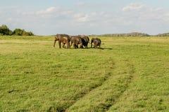 Fuga do elefante fotos de stock