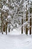 Fuga do esqui Imagens de Stock Royalty Free