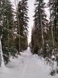 Fuga do esqui Foto de Stock Royalty Free