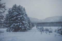 Fuga do inverno através da neve e das árvores foto de stock royalty free