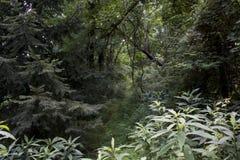 Fuga do jogo através da floresta foto de stock royalty free