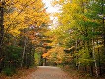 Fuga do Mountain bike das estradas de transporte do Acadia Imagens de Stock