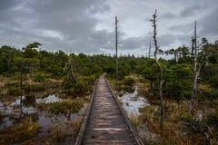 Fuga do pântano de Shorepine - Vancôver Isla Foto de Stock Royalty Free