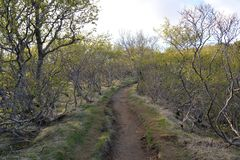 Fuga do parque nacional de Skaftafell foto de stock royalty free