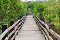 Fuga dos manguezais de Xinfeng em Hsinchu, Taiwan imagem de stock royalty free