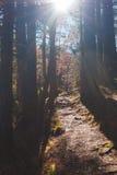 Fuga em uma floresta Imagens de Stock Royalty Free