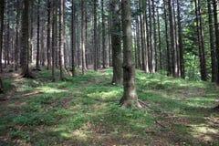 Fuga em uma floresta Foto de Stock