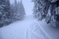 Fuga enevoada da montanha do inverno coberta com a neve Árvores com neve Fotos de Stock