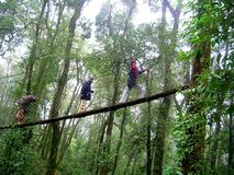 Fuga na árvore Fotos de Stock
