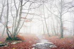Fuga na floresta nevoenta no outono fotografia de stock