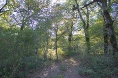 Fuga na floresta no outono com as folhas caídas na floresta, paisagem do outono Imagens de Stock