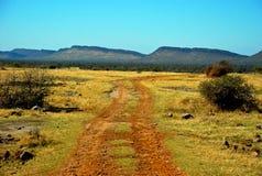 Fuga na reserva africana do jogo Imagens de Stock