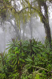Fuga na selva Imagem de Stock