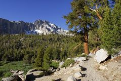 Fuga na serra montanhas de Nevada Fotografia de Stock