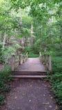 Fuga nas madeiras Imagem de Stock