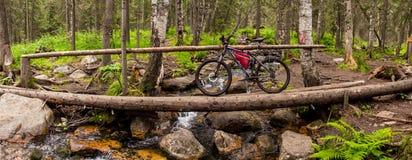 Fuga nas madeiras com visita da bicicleta Fotos de Stock