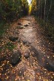 Fuga nas madeiras do outono. Paisagem Fotografia de Stock