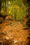 Fuga nas madeiras no outono Fotos de Stock