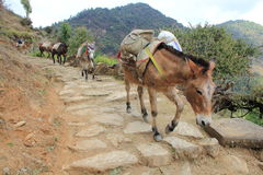 Fuga Nepal do asno foto de stock royalty free