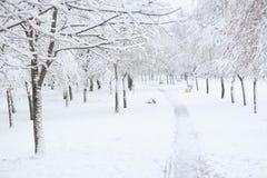 Fuga nevado no parque do inverno Imagem de Stock Royalty Free