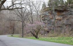 Fuga no parque estadual gigante da cidade Fotos de Stock