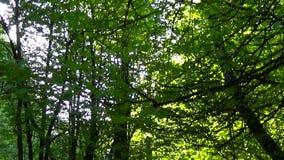 Fuga no parque Tiro vertical liso e lento da came do panorama Dia limpo e brilhante na mola filme