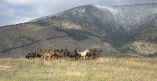 Fuga precipitosa dei cavalli Fotografia Stock Libera da Diritti