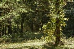 Fuga que decola em madeiras do campo brilhantemente iluminado fotos de stock