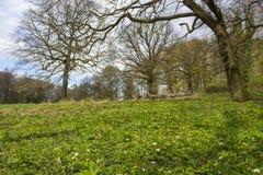 Fuga Rheinsteig de Forest Hiking da mola, Siebengebirge Alemanha imagem de stock royalty free
