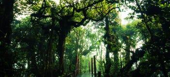 Fuga surpreendente da selva com as árvores e ramos verdes grossos no musgo Fotografia de Stock