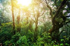 Fuga surpreendente da selva com as árvores e ramos verdes grossos no musgo Imagens de Stock Royalty Free