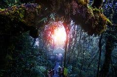 Fuga surpreendente da selva com as árvores e ramos verdes grossos no musgo Fotos de Stock