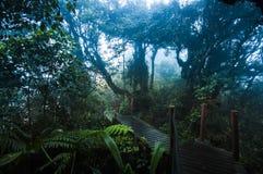 Fuga surpreendente da selva com as árvores e ramos verdes grossos no musgo Imagens de Stock