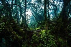 Fuga surpreendente da selva com as árvores e ramos verdes grossos no musgo Imagem de Stock Royalty Free