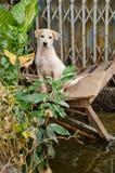 Fuga triste del cane dall'inondazione Immagine Stock Libera da Diritti