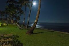 Fuga tropical da noite fotografia de stock