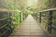 Fuga tropical nevoenta do caminho da floresta tropical Foto de Stock Royalty Free
