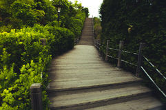 Fuga verde Fotografia de Stock