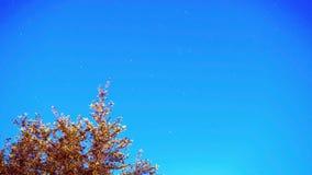 Fugas da estrela do lapso de tempo no céu noturno vídeos de arquivo