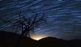 Fugas das estrelas com árvore Fotografia de Stock