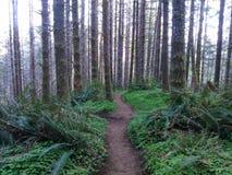 Fugas de caminhada em Oregon Fotos de Stock Royalty Free