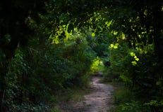 Fugas do verde Fotografia de Stock Royalty Free