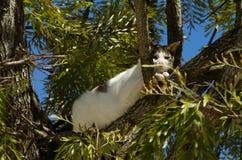 Fugitivo disperso do gato acima de uma árvore Fotos de Stock Royalty Free