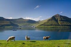 Fuglafjordur, isole faroe Immagini Stock Libere da Diritti